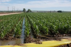 Irrigating a cornfield in Northeast Colorado. Image courtesy Northern Water.