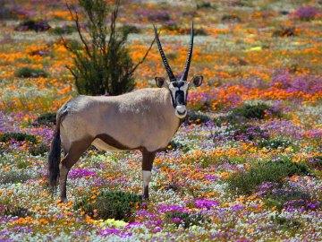 namaka parc national afrique du sud