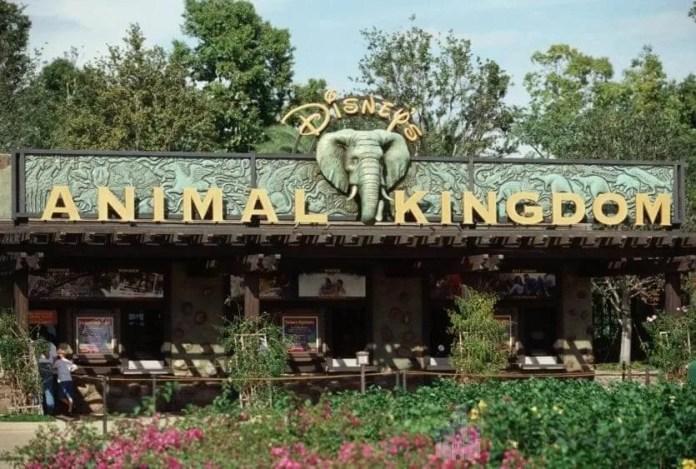 Saiba como comer barato no Animal Kingdom com o nosso guia