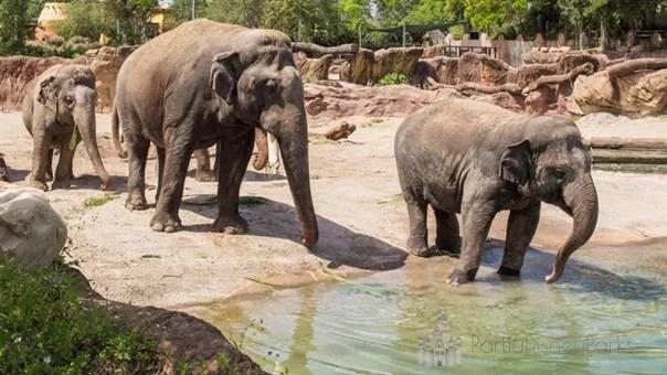 Busch Gardens Elephant Tour