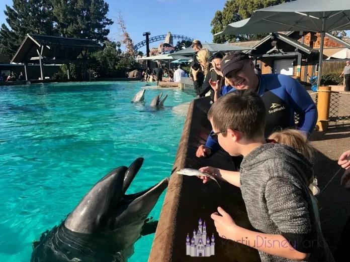 Dolphin Encounter Sea World