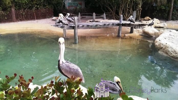 pelican-preserve
