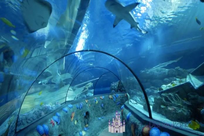Sea Life Aquarium - Icon Park