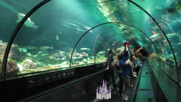 Shark-Encounter-Seaworld
