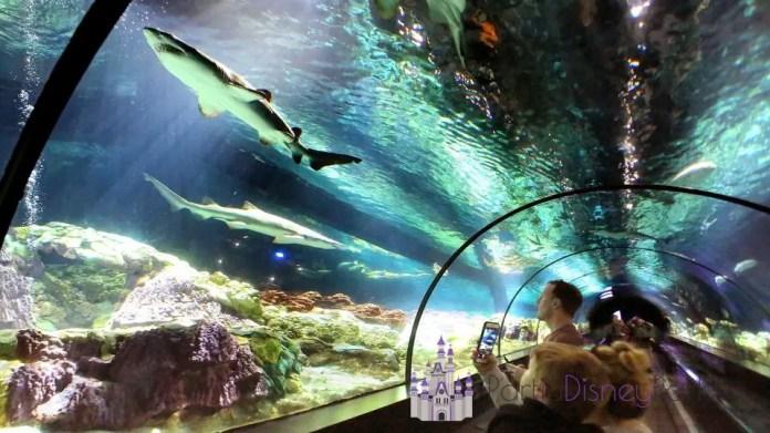Sharks-Encounter-Sea-World