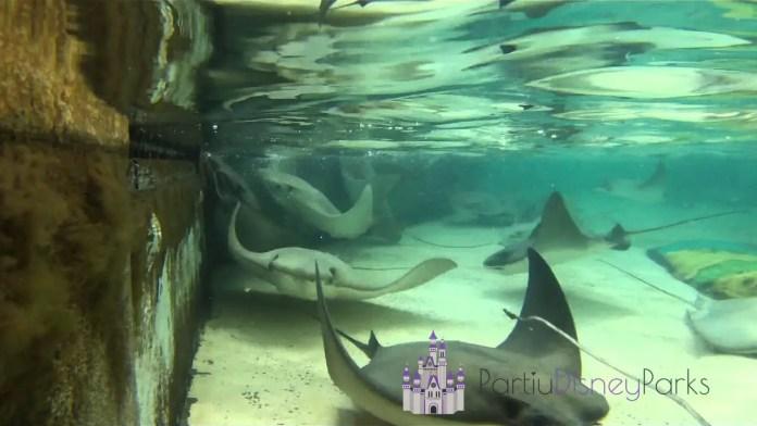 Stingray-Lagoon-SeaWorld