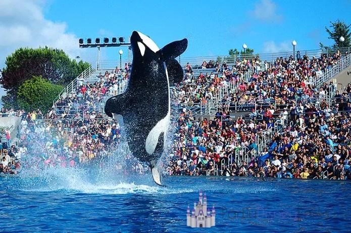 orca-encounter-novo-show-sea-world