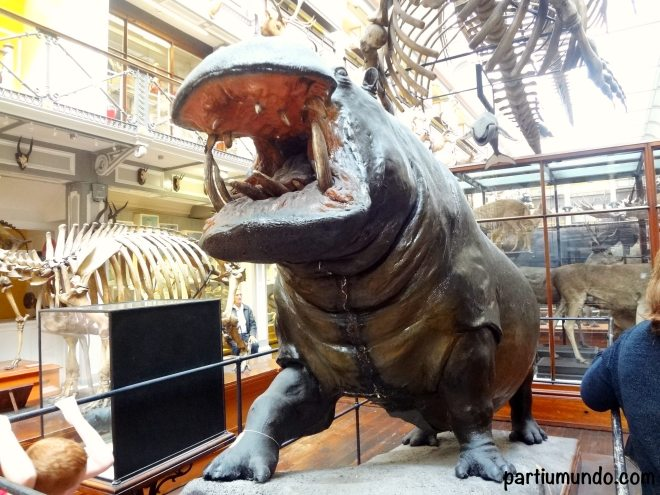 National History Museum of Dublin 16