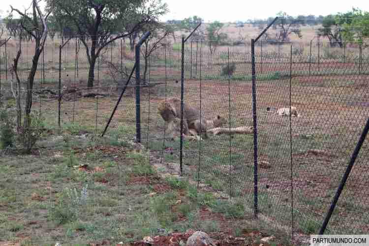 Lion and Safari Park 10