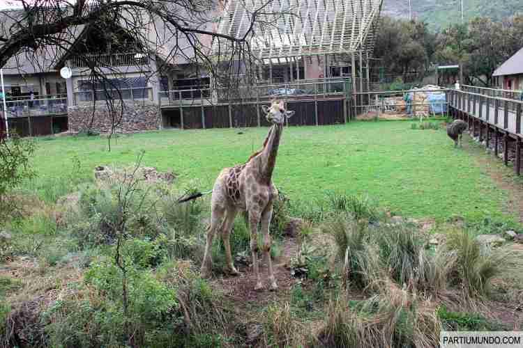 Lion and Safari Park 15