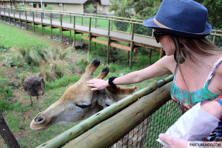 Lion and Safari Park 17