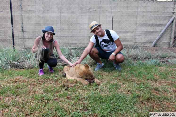 Lion and Safari Park 31
