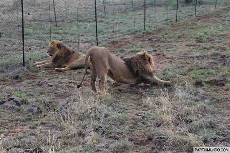 Lion and Safari Park 6