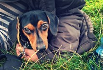 Taking your pet abroad 4