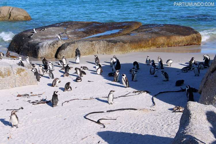 visiting_the_penguins_at_boulders_beach