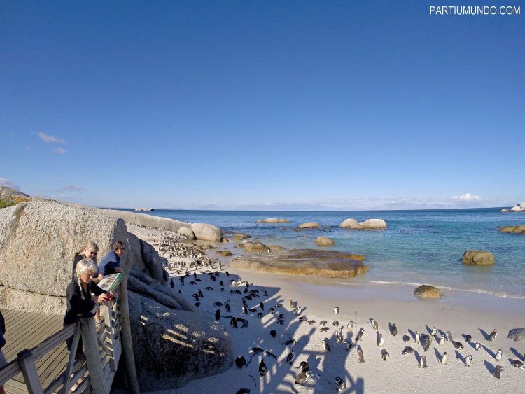 rsz_visiting_the_penguins_at_boulders_beach_19