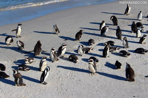 rsz_visiting_the_penguins_at_boulders_beach_5
