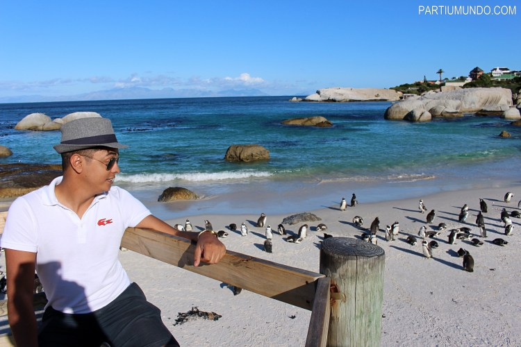 rsz_visiting_the_penguins_at_boulders_beach_6