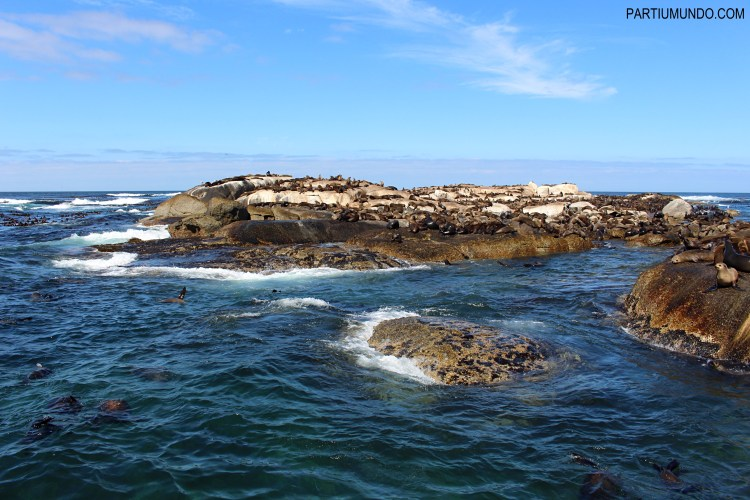 Visiting the seals at Duiker Island, Cape Town 10