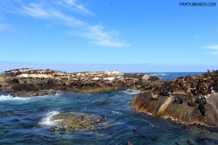 Visiting the seals at Duiker Island, Cape Town 13
