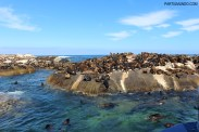 Visiting the seals at Duiker Island, Cape Town 17