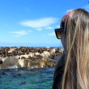Visiting the seals at Duiker Island, Cape Town 18