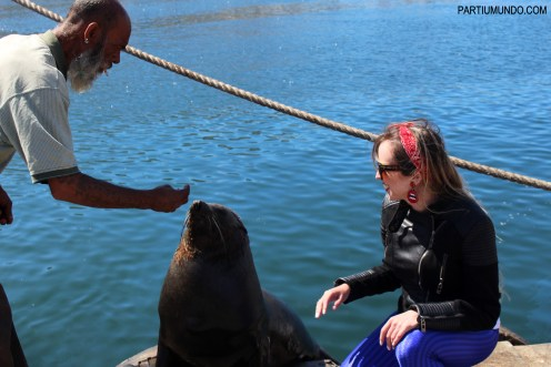 Visiting the seals at Duiker Island, Cape Town 25