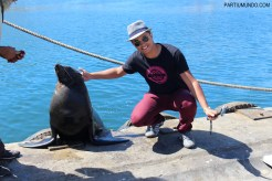 Visiting the seals at Duiker Island, Cape Town 26