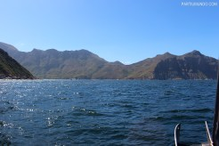 Visiting the seals at Duiker Island, Cape Town 7