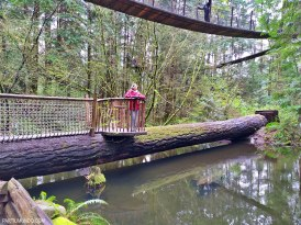 Parque Capilano Suspension Bridge 14