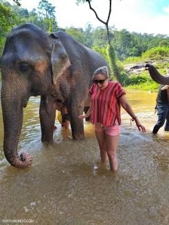 Santuário dos elefantes 31