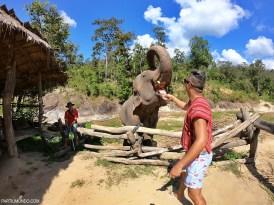 Santuário dos elefantes - Chiang Mai