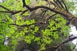 Light & Leaves