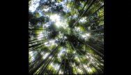 ΚΟΙΤΑΞΤΕ ΠΡΟΣ ΤΑ ΠΑΝΩ Όταν το περιβάλλον σας δείχνει «κλειστό» χωρίς οπτικές διαφυγές, σηκώστε ψηλά τη ματιά σας. Τα ψηλά δέντρα δημιουργούν εντυπωσιακές εικόνες, το ίδιο και τα ψηλά κτήρια σε μια μεγαλούπολη.