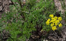 Wildflowers (8 of 12)