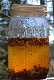 Bark in alcohol, becoming a tincture