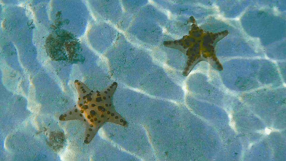 starfish in Siargao