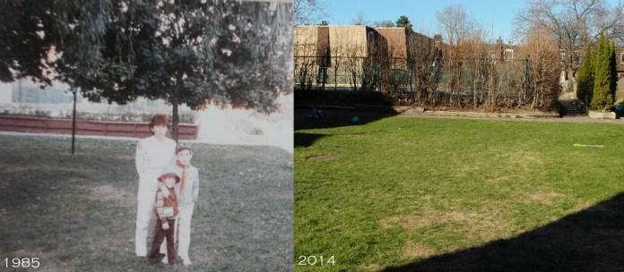 Somervale Gardens before and after