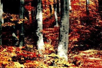 Techno Herbst 2020 Wald
