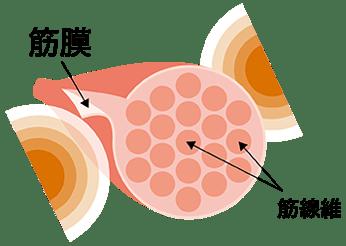 kinmaku-figure