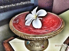 A typical Balinese flower