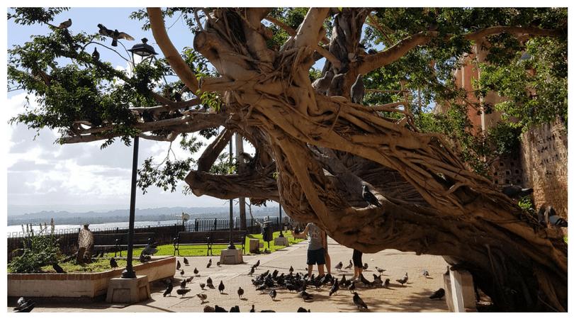 Parque de las palomas - Viejo San Juan