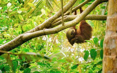 4 lugares increíbles para disfrutar del ecoturismo en Costa Rica