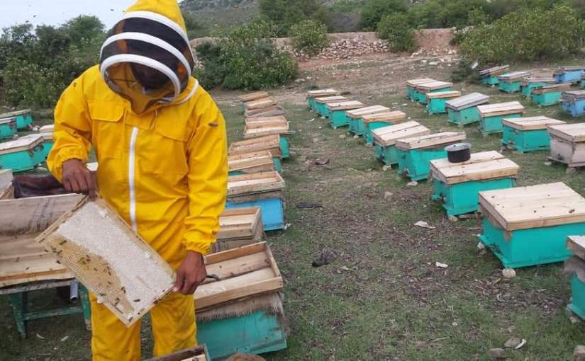 Increase honey production in Paktia province