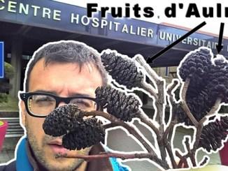 fruits aulnes