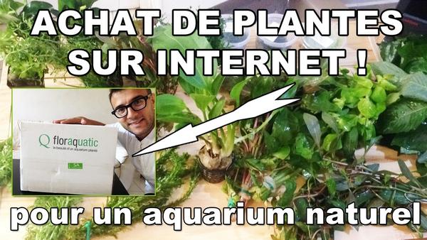 avis floraquatic.fr et aide pour le choix de plantes pour un aquarium naturel