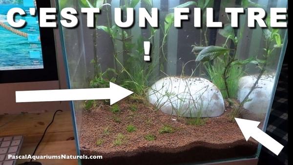 cf stone 40 : le filtre en forme de roche d'aquarium !