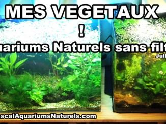 plantes aquariums naturels