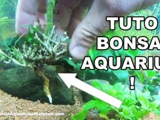 tuto bonsaï d'aquarium