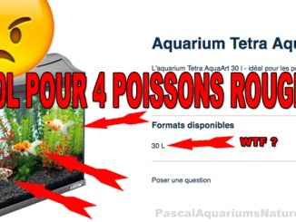 coup de gueule : Tetra ne respecte pas les poissons rouge